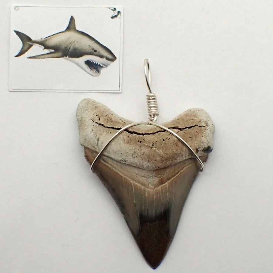 Colgante diente Carcharodon megalodon