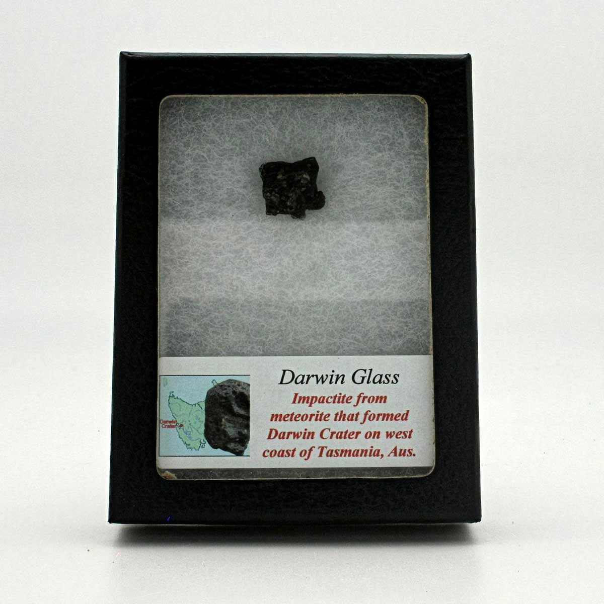 Darwin Glass