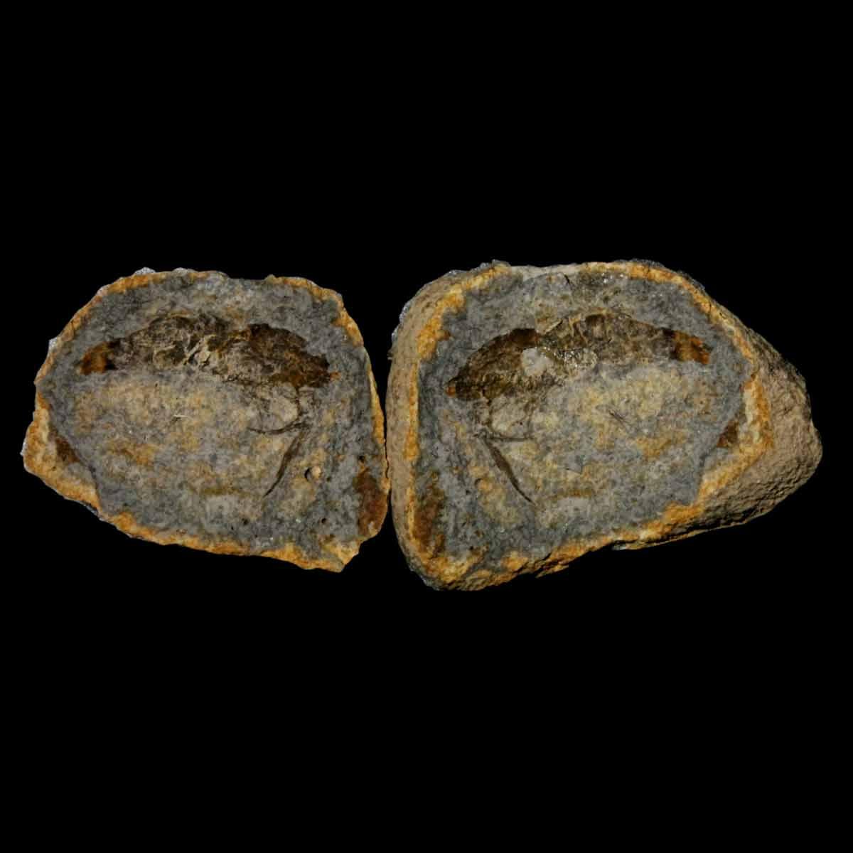 Ambilobeia karojoi
