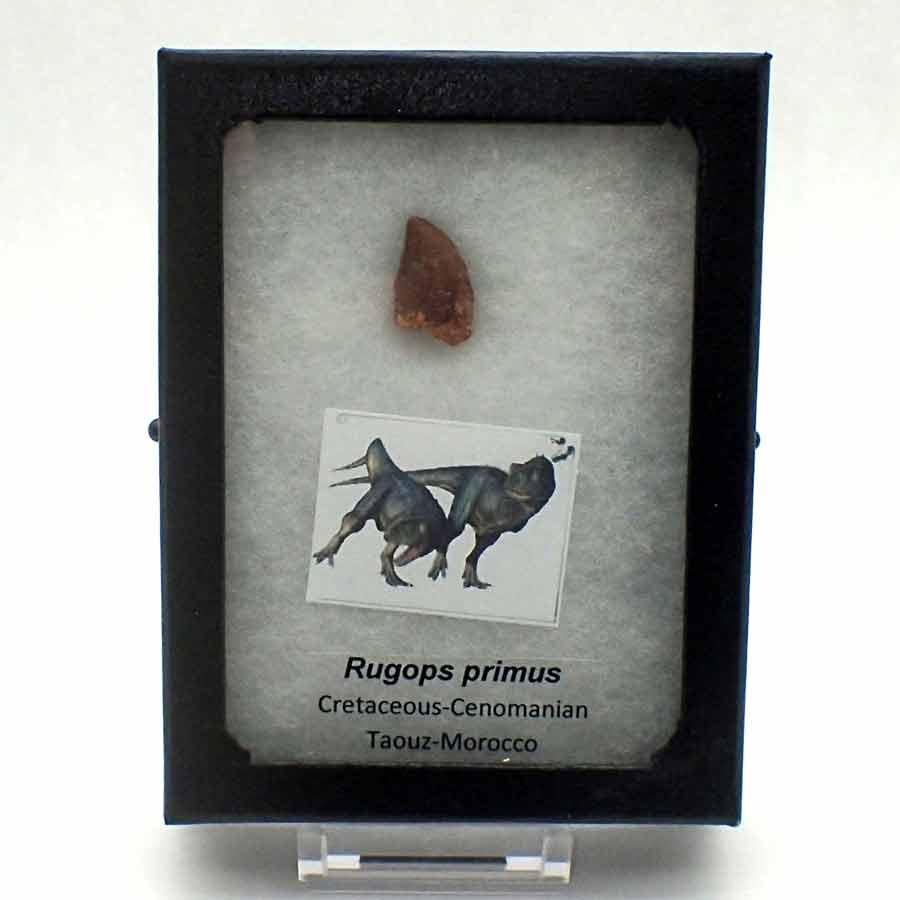 Rugops primus