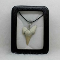 pendant fossil shark tooth