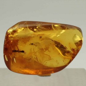 Heminoptero en Amber-insects, fossils-Oligocene, Dominican Republic