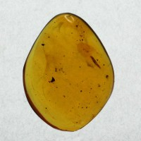 amber, , insects, fossils, Oligocene, Dominican Republic