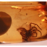 amber, spider, insects, fossils, Cretaceous, Baltic Sea